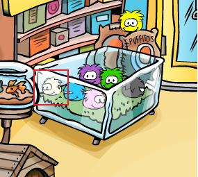 Puffle branco no pet shop